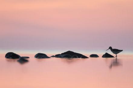 Visning och verkstad i Nacka konsthall Åk 6-9: Gryningsljus till nattljus